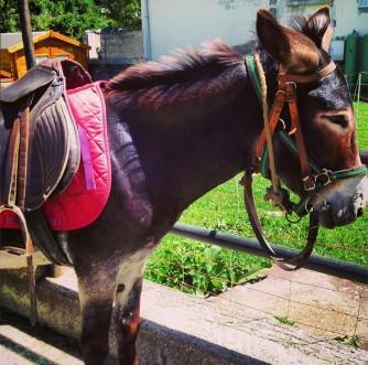 promenades-equestres-et-a-dos-danes